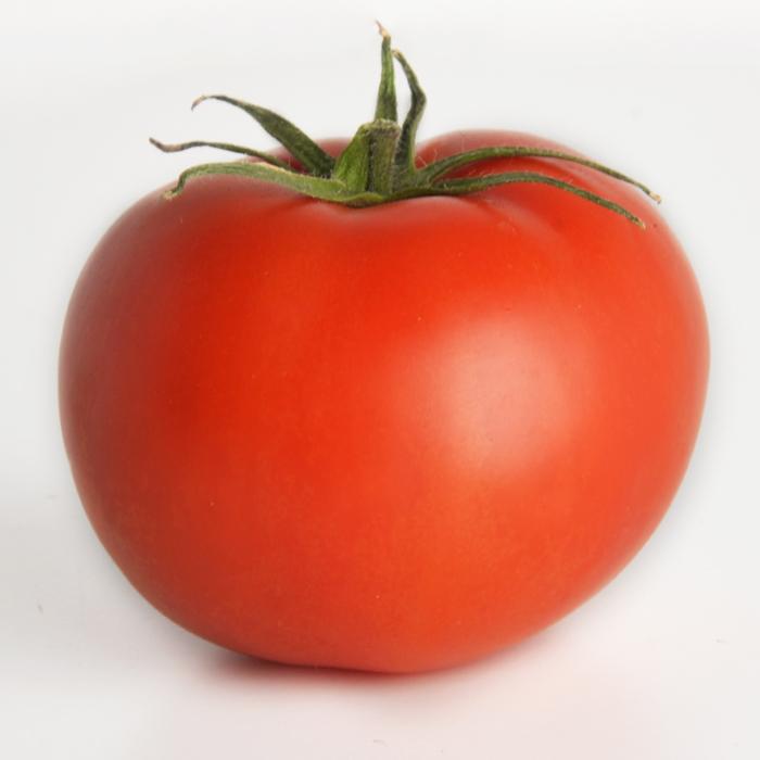 tomate und